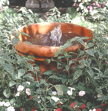 Fountain in a Pot