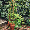 Trellis in a Pot