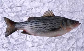 How to Tell if Fish is Fresh