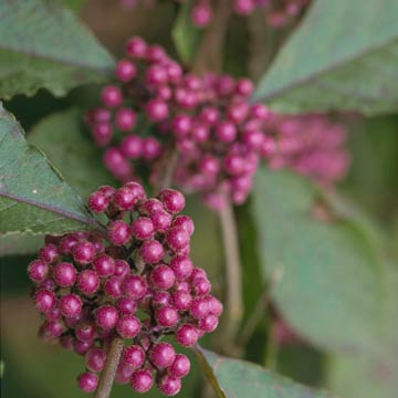 Best Plants For Attracting Birds In The South