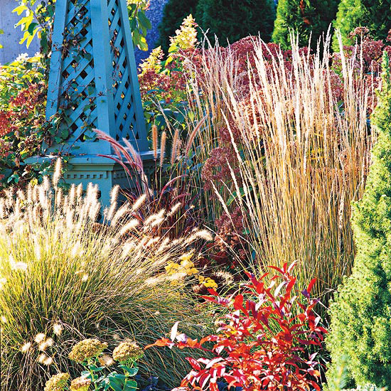 The beauty of ornamental grasses for Ornamental grass that looks like wheat