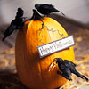 Halloween Pumpkin with Crows