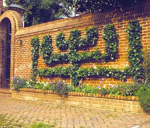 Espalier Is The Term Used To Describe The Process Of Training Trees,  Shrubs, And Woody Vines Against A Flat Surface, Such As A Wall.