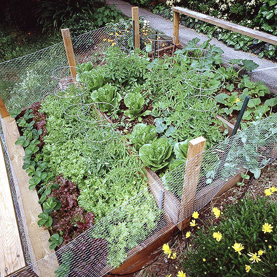 How Do I Safely Stop Rabbits in My Vegetable Garden