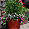 Colorful Container Gardens