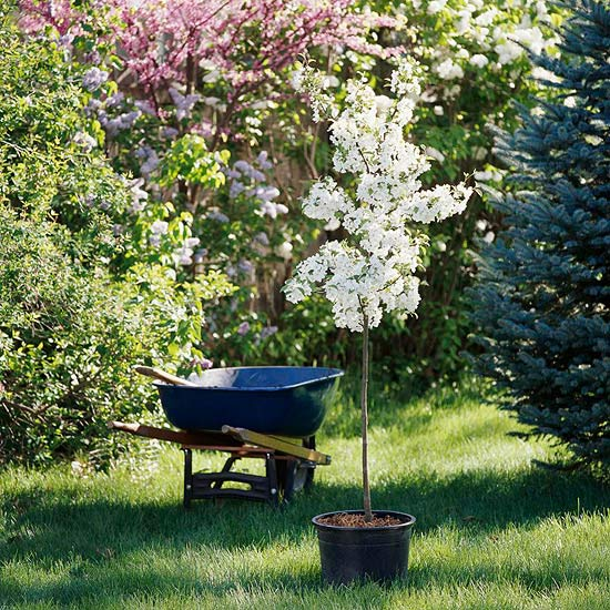 http://www.bhg.com/gardening/trees-shrubs-vines/care/the-proper-way-to-plant-a-tree/