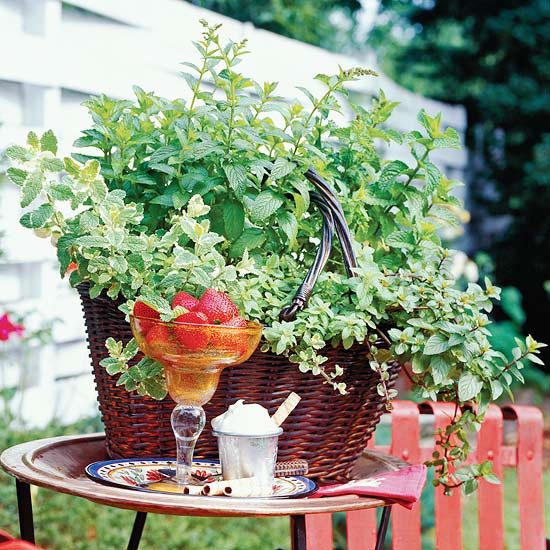 Guide to Mint Plants