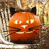 Fun Feline Pumpkin