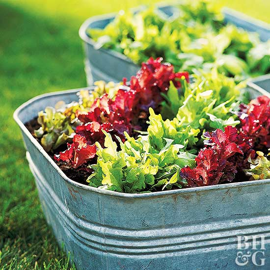 Growing vegetables in containers - Galvanized containers for gardening ...