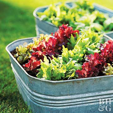 Cool-Season Salad Gardens