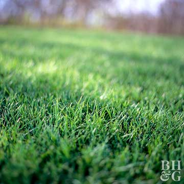 Easy Steps to Renovate Your Lawn