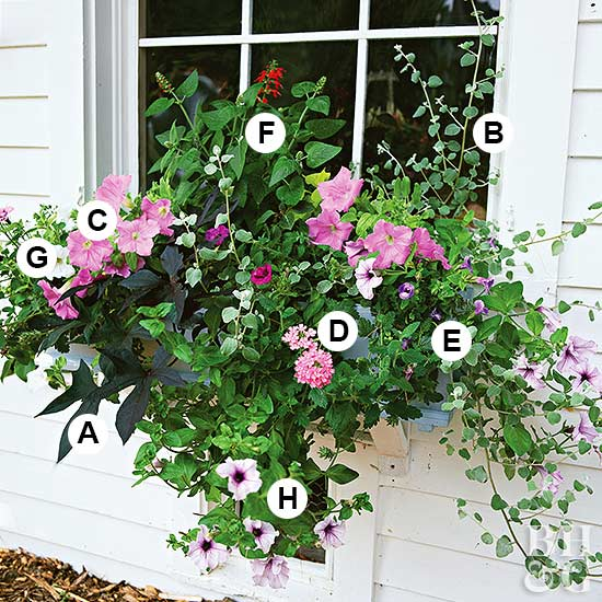 a gallery of beautiful container garden ideas - Flower Garden Ideas Partial Sun