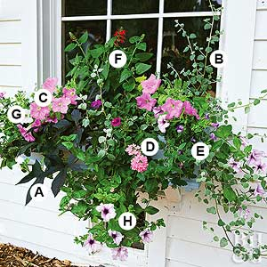 Great Containers for Gardening & Easy Recipes for Beautiful Window Boxes in Sunny Spots Aboutintivar.Com