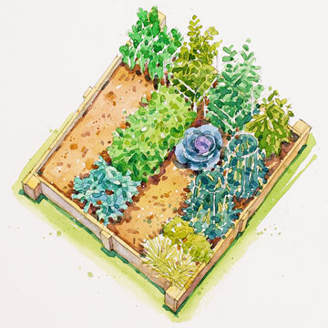 Summer vegetable garden plan for Summer vegetable garden