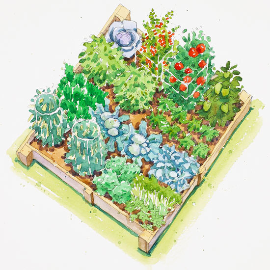 fall harvest vegetable garden