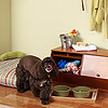 Create a Doggie Nook
