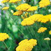 Grow Drought-Tolerant Plants