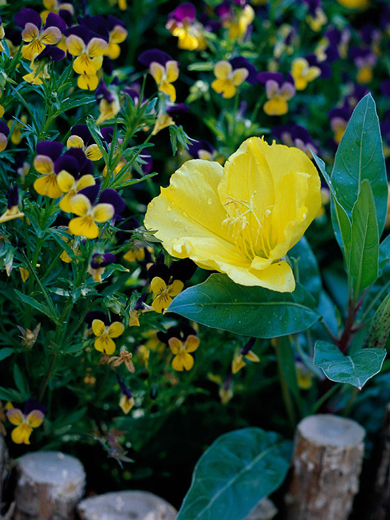 1000 Images About Perennial Full Sun Zone 6 On Pinterest