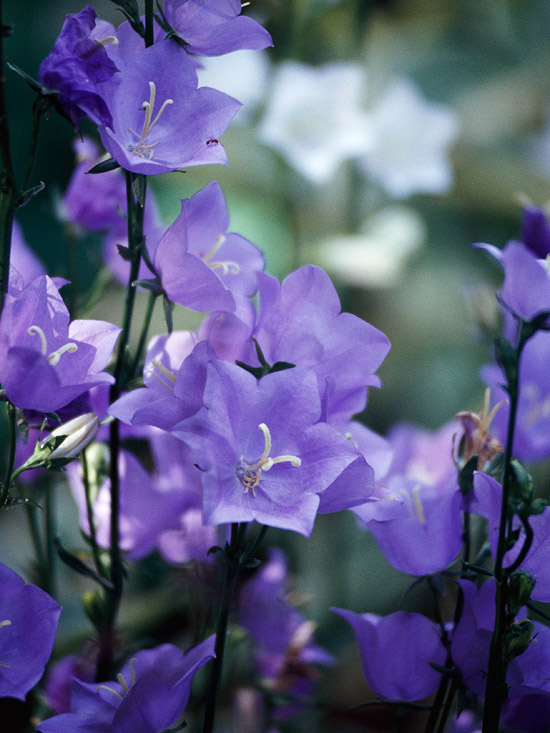 The 18 Best Plants for Cottage Gardens – Best Garden Plants