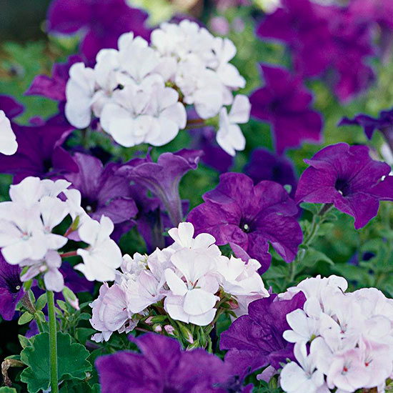 Top Annual Flowers to Grow in the Shade