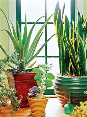 Houseplants for the Forgetful Gardener