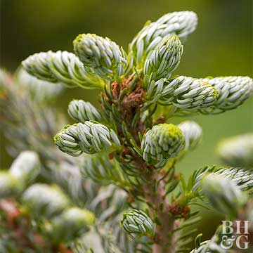Easy Evergreens for Four-Season Interest