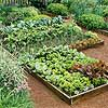 Raised-Bed Salad Garden