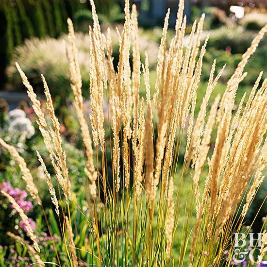 17 top ornamental grasses for Tall grass garden
