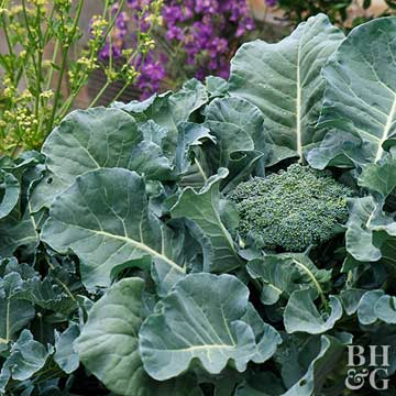 The Best Cold-Tolerant Veggies