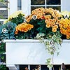 Create a Wonderful Window Box