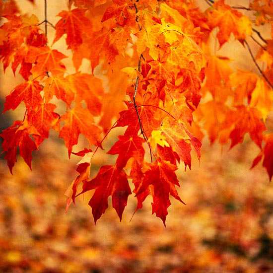 Top Trees and Shrubs f...