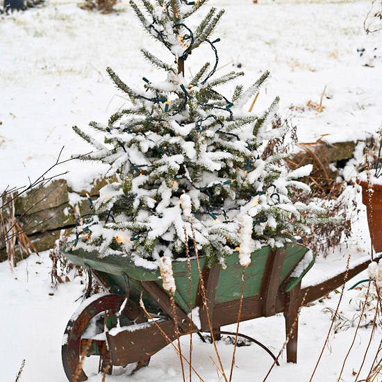 Wintry Wheelbarrow