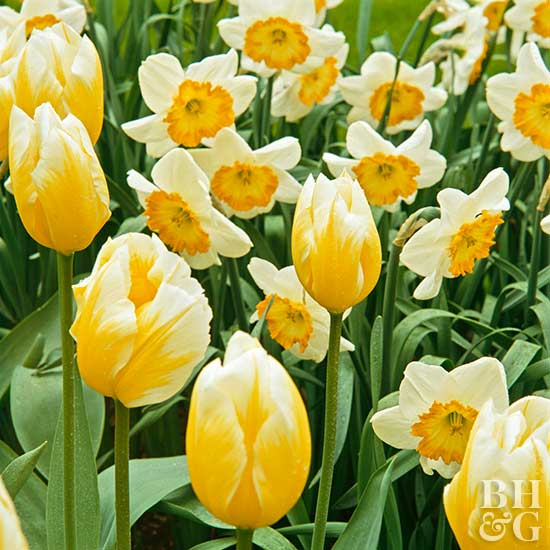 Spring Blooms for Your Garden