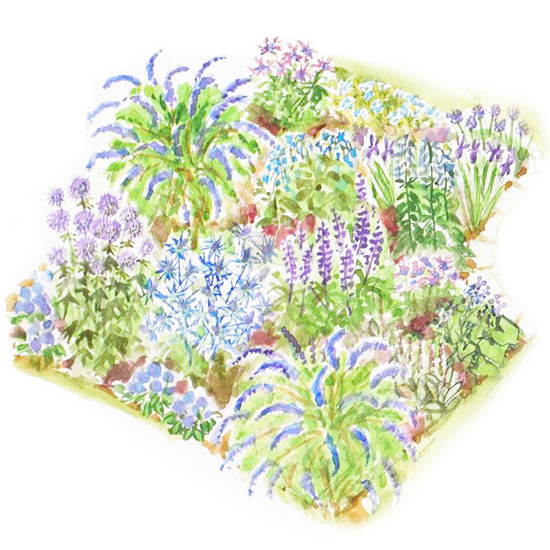 Beautiful Blues Garden Plan