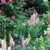 Create Beautiful Plant Combinations