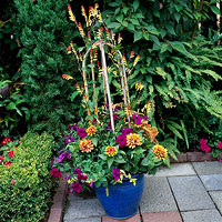Butterfly Container Garden Ideas