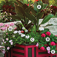 Create Dramatic Container Gardens
