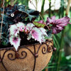 Let Your Houseplants Spend a Summer Outdoors