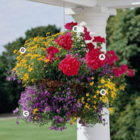 Create Stunning Hanging Baskets