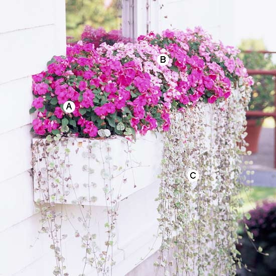 Window boxes tips tricks and tutorials amy allender dot com Better homes and gardens planting guide