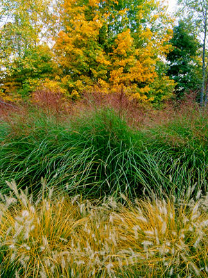 The Beauty of Ornamental Grasses