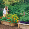 Grow Up with Raised Beds