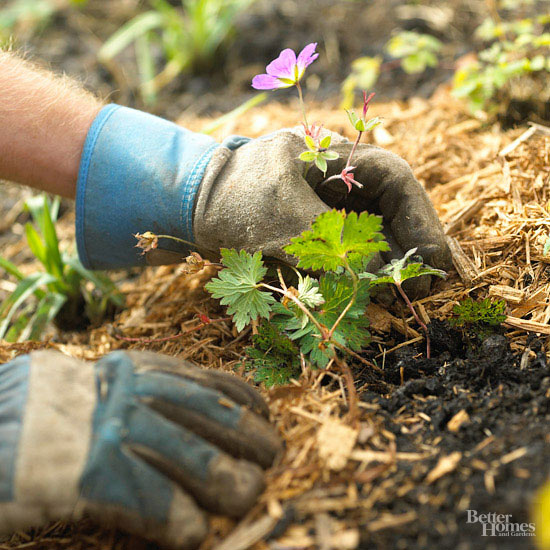 The Best Mulches