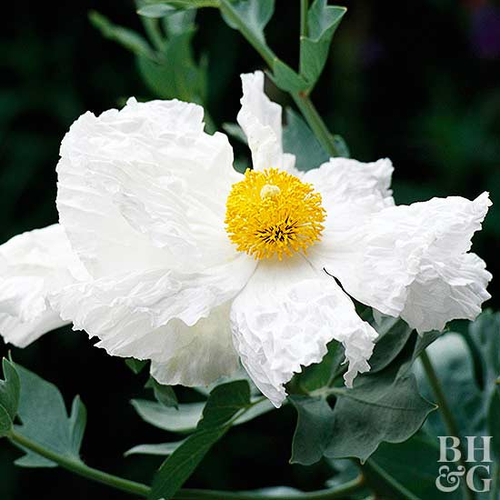 14 top native plants of southern california for Best flowers to grow in california