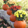 Creative Pumpkin Arrangment