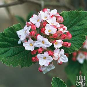 The Most Beautiful Spring-Flowering Shrubs