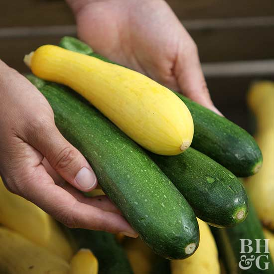 Growing Zucchini On A Trellis: How To Grow Summer Squash