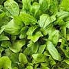 Smooth-Leaf Spinach