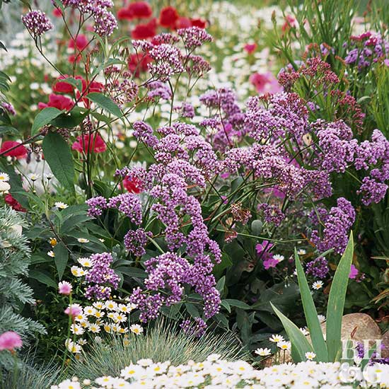 Better Homes And Gardens Sweepstakes >> Sea lavender