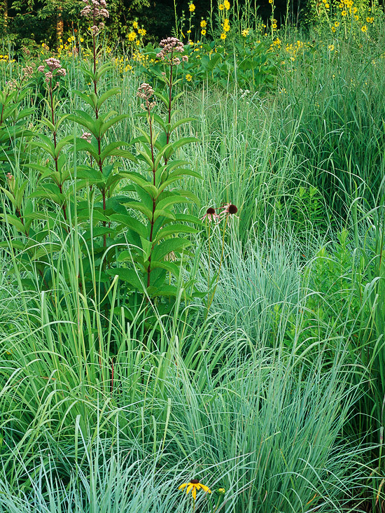 Big bluestem for Large grasses for gardens